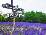 Lavender Fields Approximately 20 minutes by car from the hotel